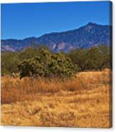 Rincon Peak, Tucson, Arizona Canvas Print