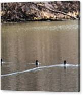 Ring-necked Duck Formation Canvas Print
