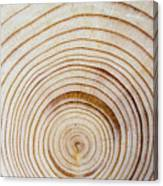 Rings Of A Tree Canvas Print