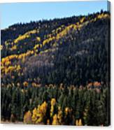 Rio Grande National Forest Canvas Print