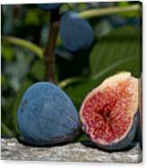 Ripe Figs Canvas Print