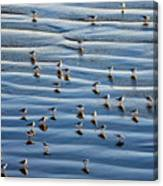 Ripples Of Sand Dotted With Plovers Canvas Print