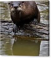 Rive Otter Canvas Print