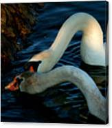 River Bank Swans Nature Pictures For Sale Canvas Print