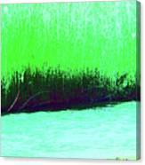River Grasses 3 Canvas Print