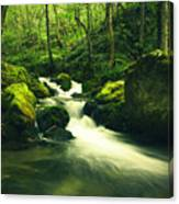 River In A Green Forest Canvas Print