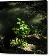 River In The Woods Canvas Print
