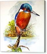 River Kingfisher Canvas Print