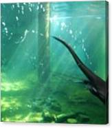 River Otter Swim Canvas Print