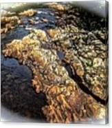 River Rock Canvas Print