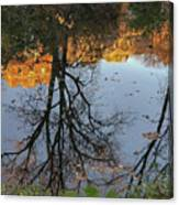 River Trees Canvas Print