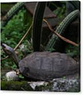 River Turtle 1 Canvas Print