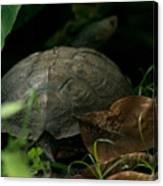 River Turtle 2 Canvas Print