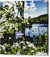River View Through Flowers. On The Bridge Of Flowers. Canvas Print