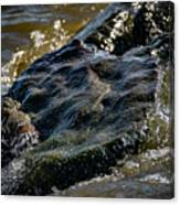 River Washed Rock Canvas Print