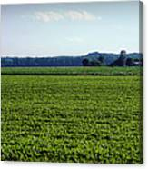 Riverbottom Farms Canvas Print