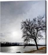 Riverwalk Tree Canvas Print