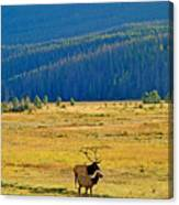 Rmnp Plains In Autumn Canvas Print