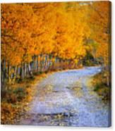 Road Between Trees Canvas Print