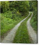Road In Woods 1 D Canvas Print