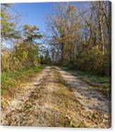 Road In Woods Autumn 4 A Canvas Print