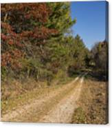 Road In Woods Autumn 5 Canvas Print