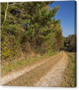Road In Woods Autumn 6 Canvas Print