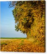 Road Of Leaves Canvas Print