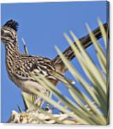 Road Runner 3 Canvas Print