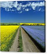 Road Through Flowering Flax And Canola Canvas Print