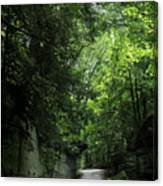 Road Through The Forest Gorge Canvas Print