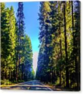 Road Through The Forest Canvas Print