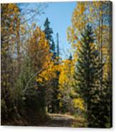 Road To Fall Colors Canvas Print