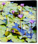 Road To Hana Water Lilies Canvas Print