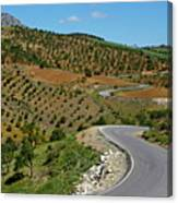 Road Winding Between Fields Of Olive Trees Canvas Print