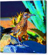 Roadrunner Canvas Print