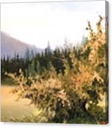 Roadside Apple Tree Canvas Print
