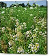 Roadside Bouquet Of Wildflowers In Mchenry County Canvas Print