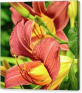Roadside Lily Canvas Print