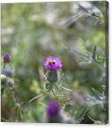 Roadside Thistle Bee Polination Canvas Print