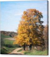 Roadside Tree In Autumn Canvas Print