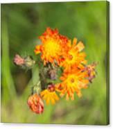 Roadside Wildflower Canvas Print