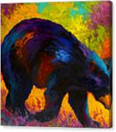 Roaming - Black Bear Canvas Print