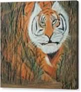 Roaring Tiger James Canvas Print
