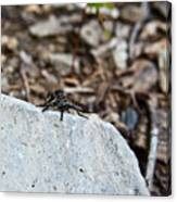 Robber Fly Sitting Canvas Print