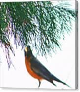 Robin 2 Canvas Print