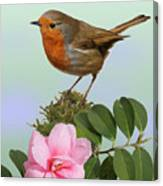 Robin And Camellia Flower Canvas Print