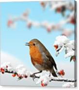 Robin And Cotoneaster With Snow Canvas Print