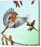 Robin And Poplar Canvas Print