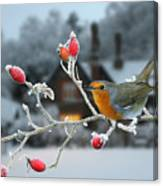 Robin And Rose Hips Canvas Print